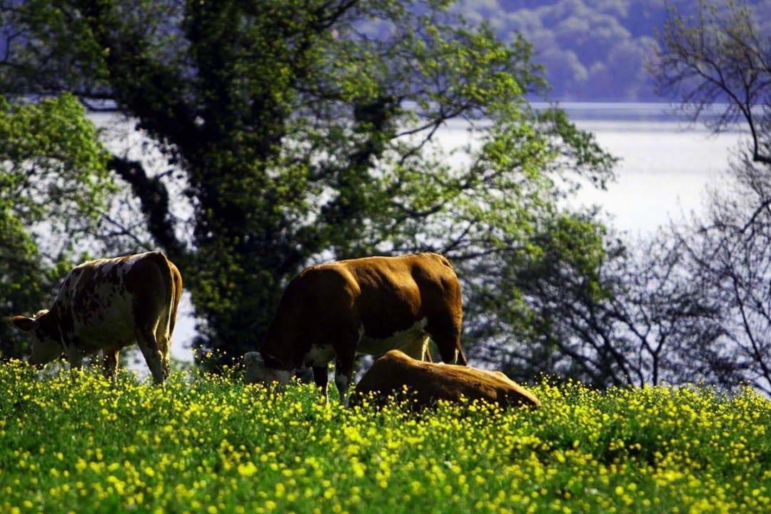 Die Bayerischen Seen sind ideale Plätze für Ihre Firmenveranstaltungen. Tagungshotels und Incentiveanbieter nutzen diese Lage für Sie.
