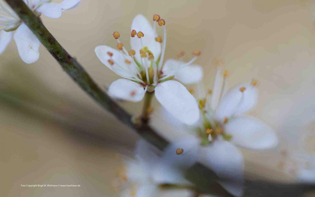Frühling und das Lied der Liebe