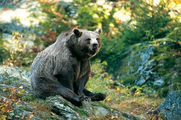 Weihnachtsgeschenk  – Bärenpatenschaft
