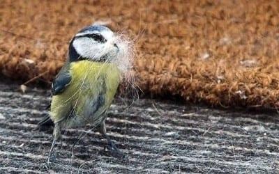 Nestbau zu Ostern