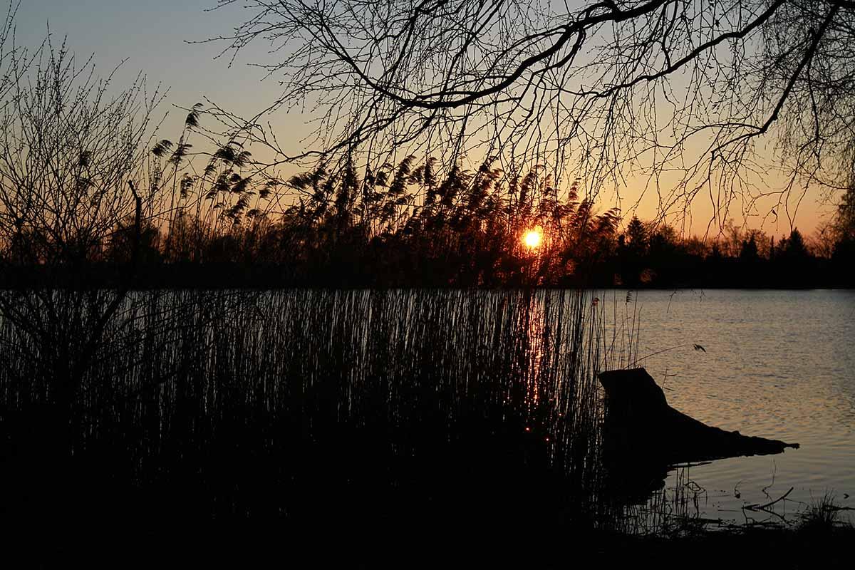 Sonnenuntergang Olchinger See mit Schilf im Vordergrund