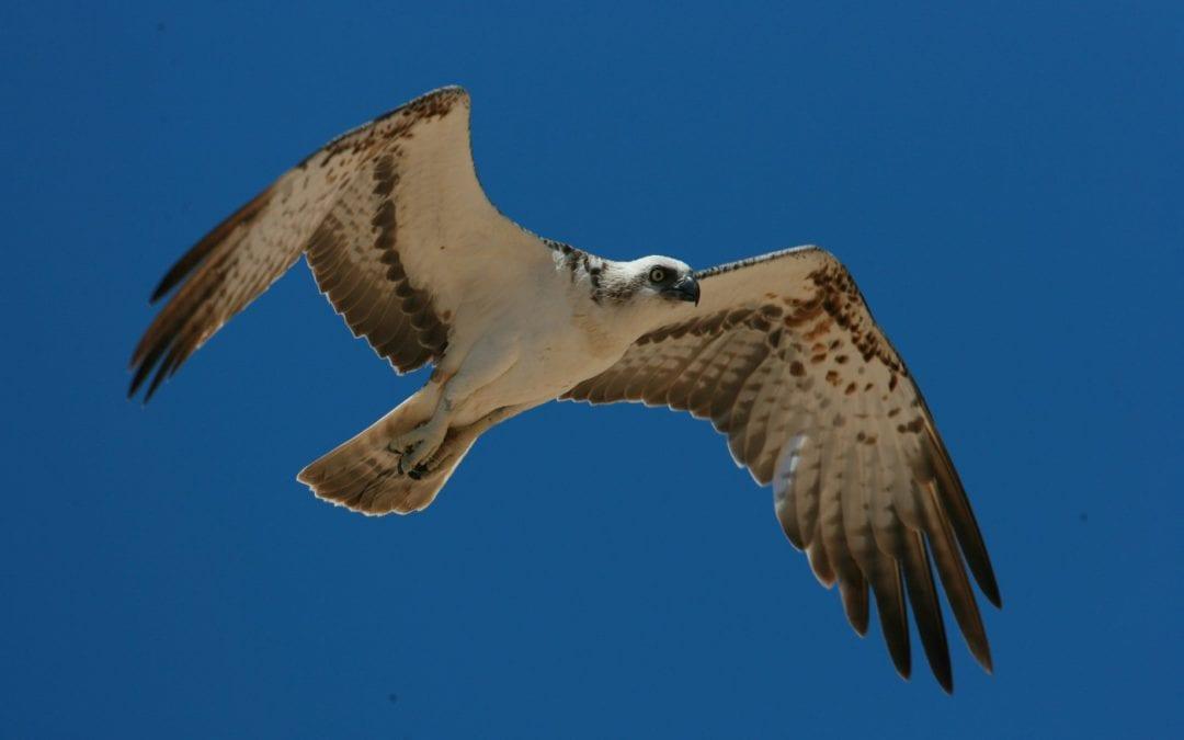 Tatort Adria: Vogeljagd auf dem Balkan gefährdet unsere Zugvögel