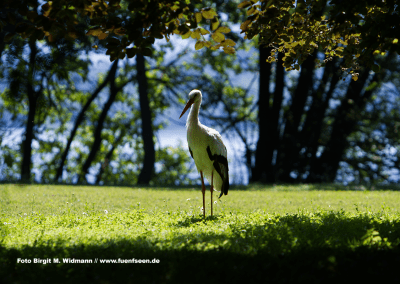 Storch Insel Pusiano