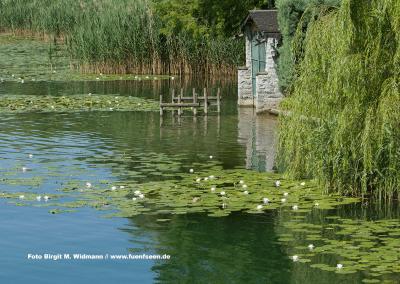 Seerosen Lago di Pusiano