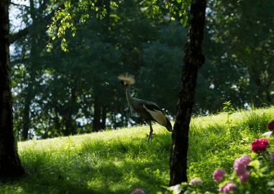 Tiere auf dem See Pusiano
