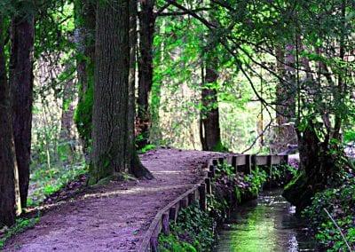 Wanderung für Krebspatienten Eibenwald