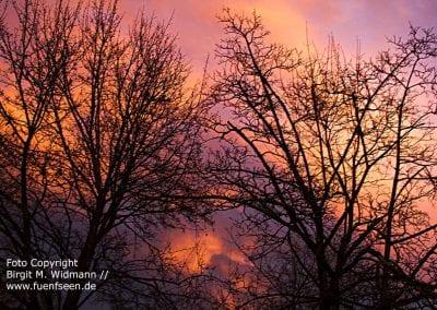 Wolken, Bäume, Stimmung
