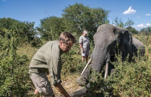 Botswana – mehr als 40 Elefanten getötet