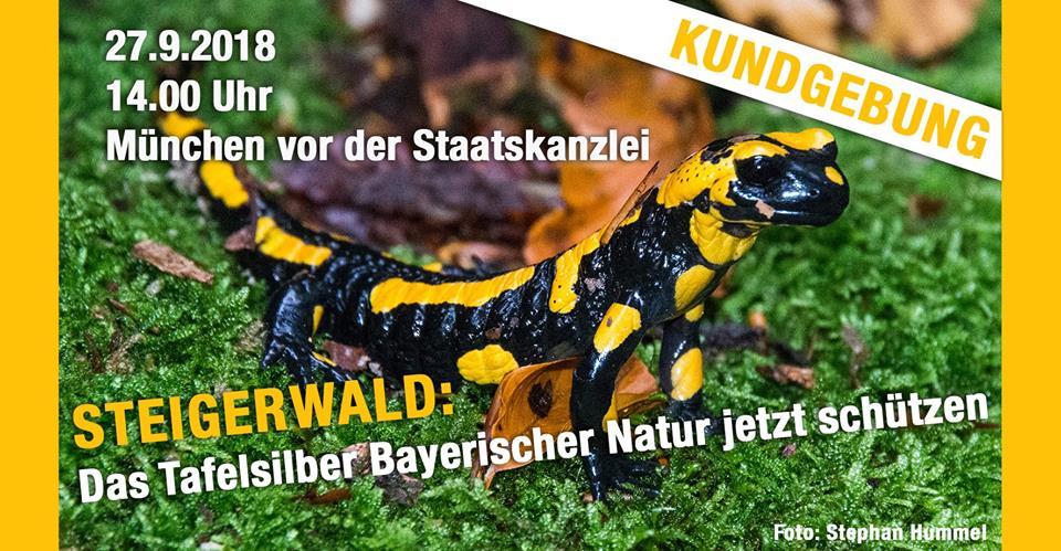 Steigerwald als Naturschutzgebiet sichern