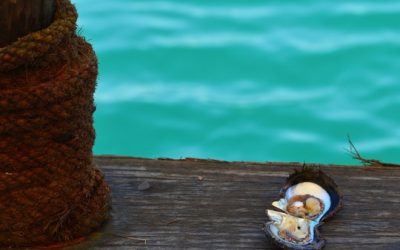 Einblicke in die Tradition des Perlentauchens